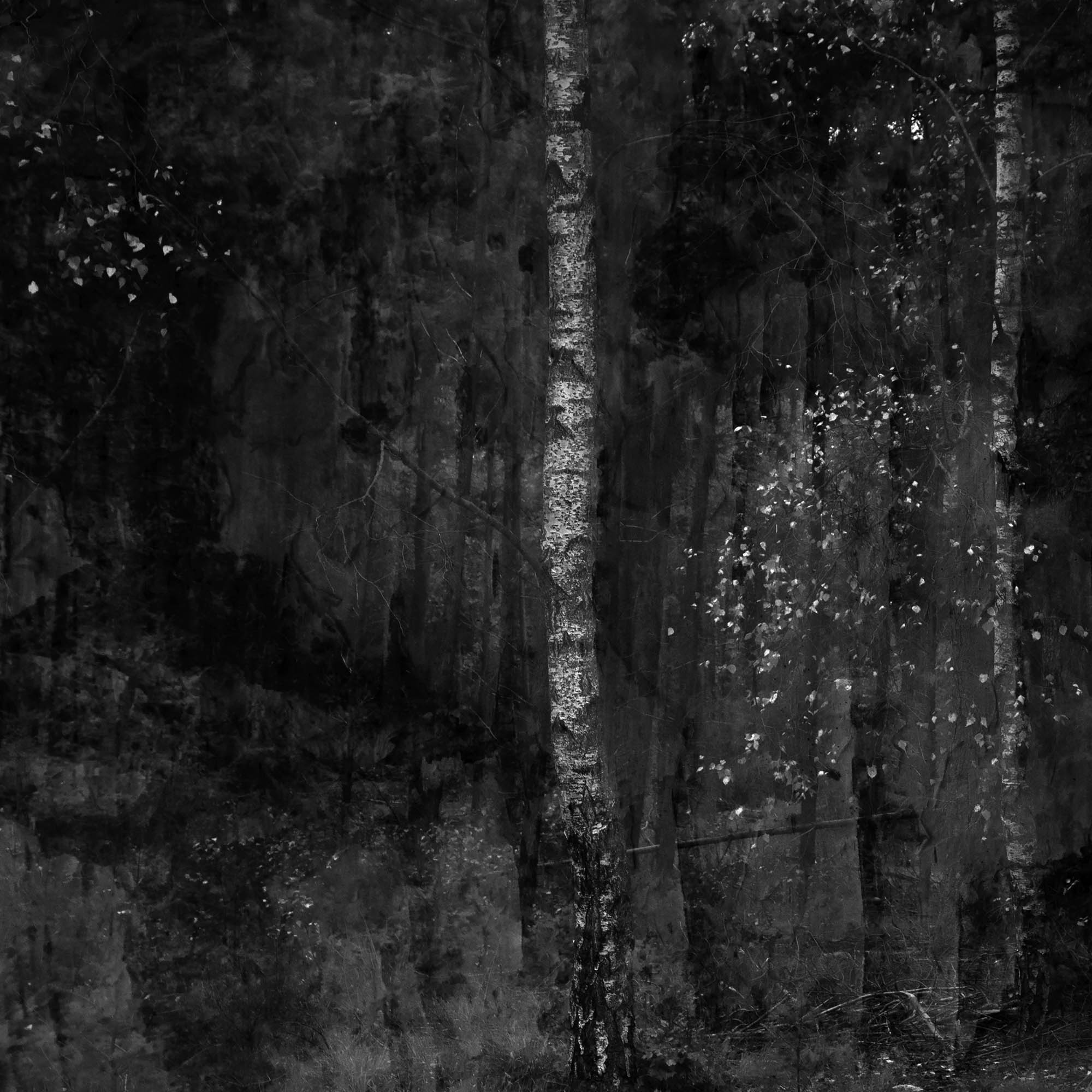 © Annette Wijdeveld (Hattem, The Netherlands) | Dialogue with Silence