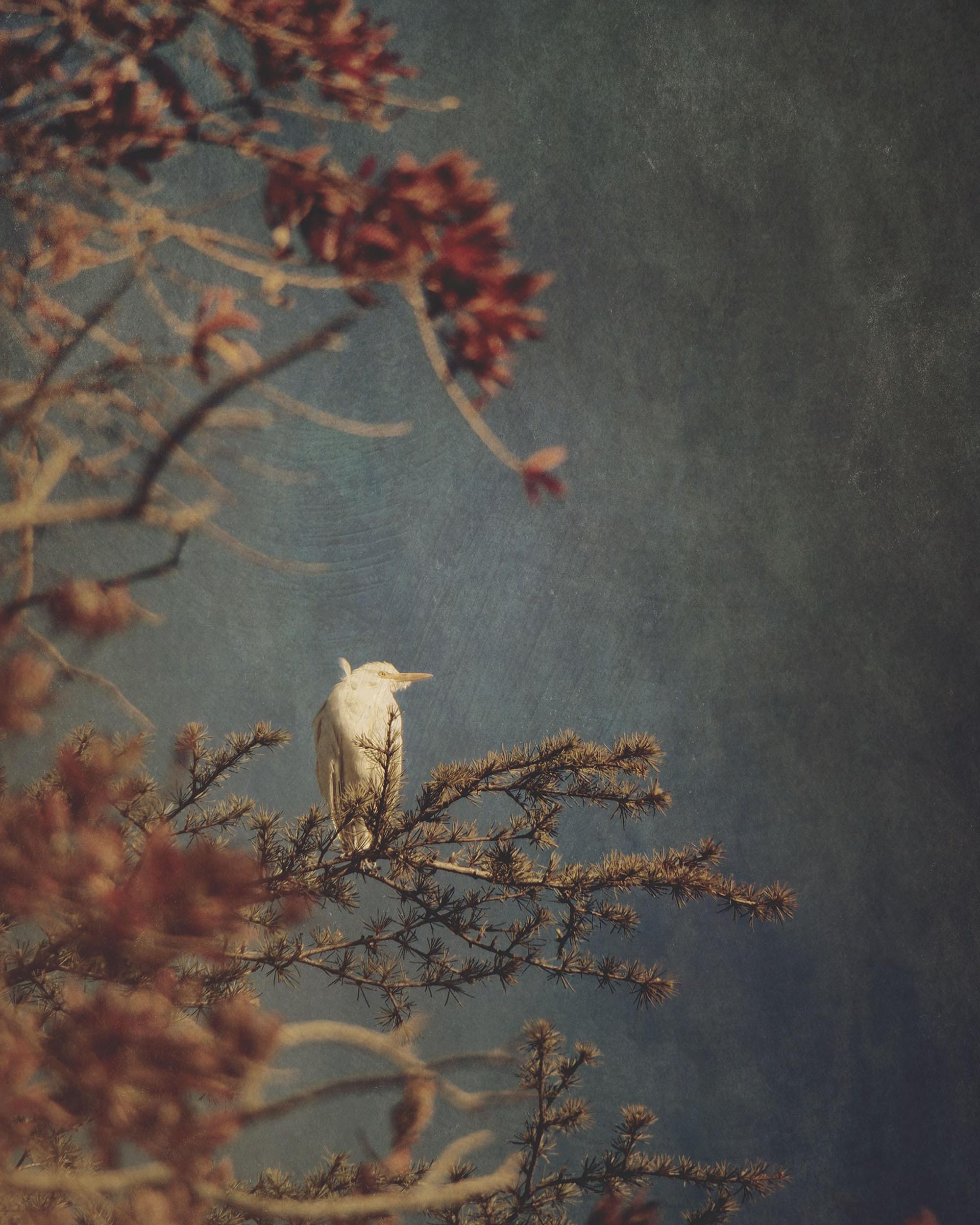 ©Jennifer Graham (South Africa) | Mujō
