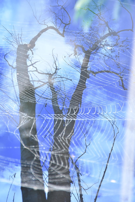 © Bernadette Heald - Among the branches