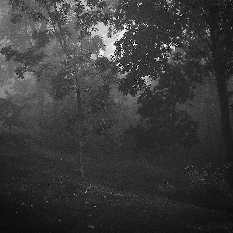 © Denise M Oehl - Dark trees