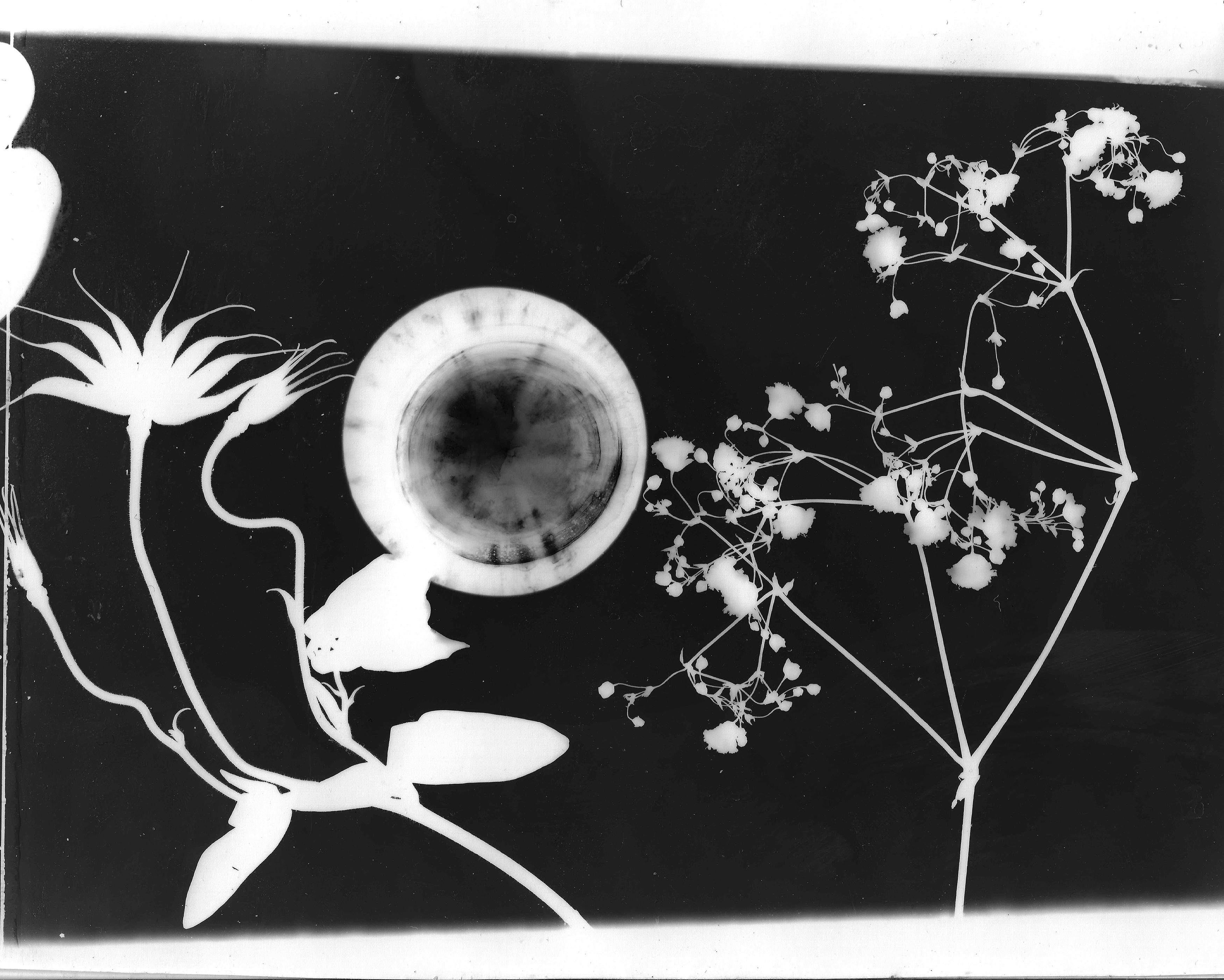 © Katie Lou McCabe - Darkroom Flower Pressing