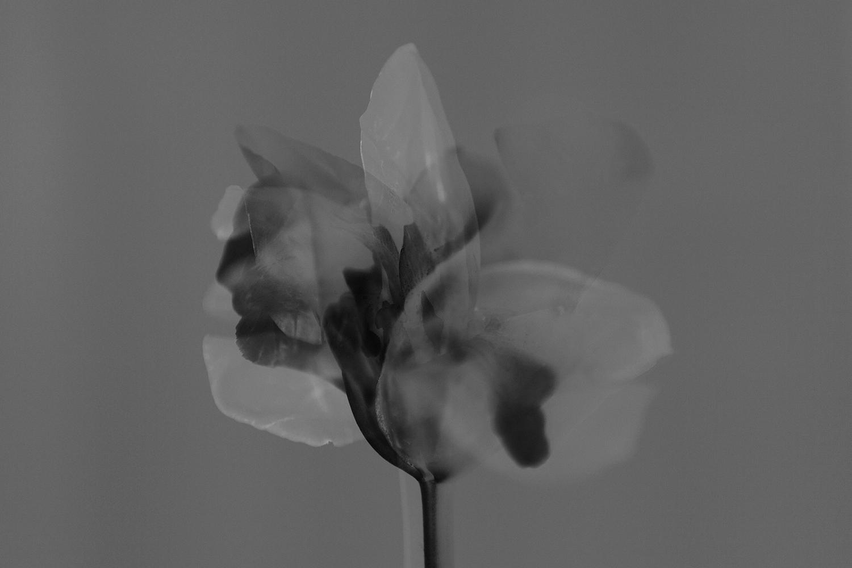 ©Anki Blomqvist - Last Years Flowers