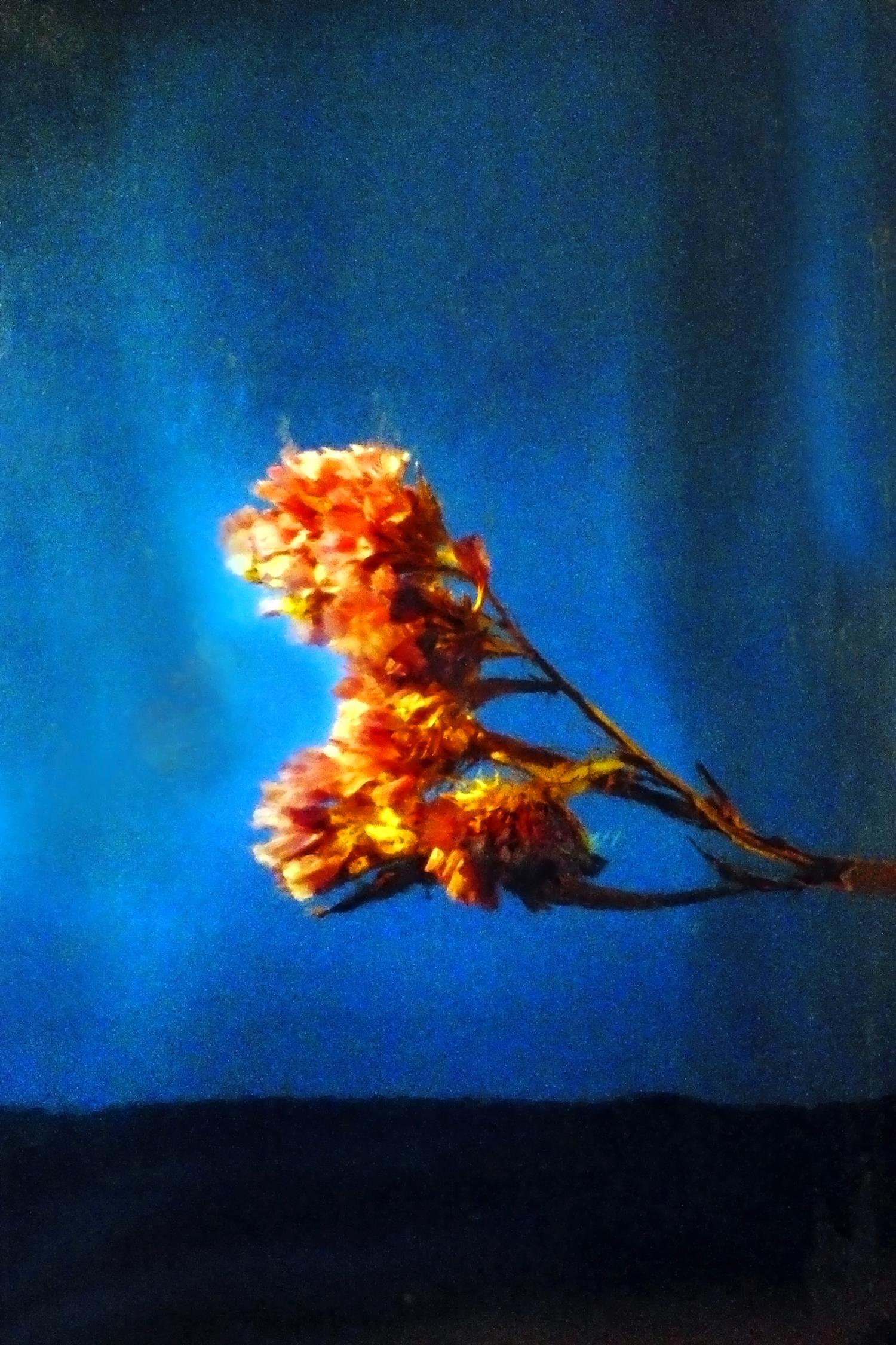 ©Markiyan Yaremchuk - Blue Coulisse, Orange Bloom