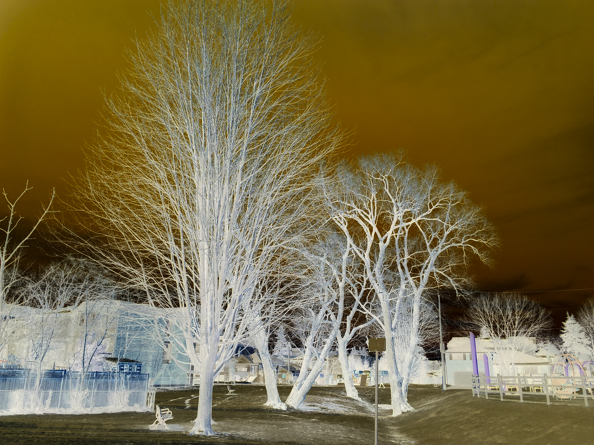 © Gwendolyn Meyer (Marshall, CA, USA) | Toronto Trees