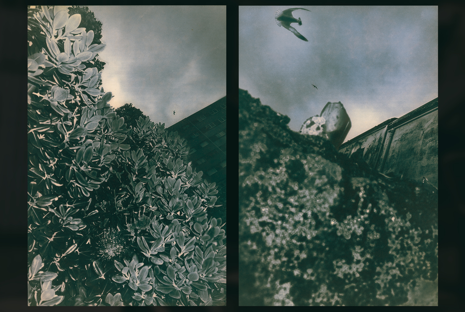 © Teyé Taejay Lee (A Coruña, Spain) | All That Fall Has Wings