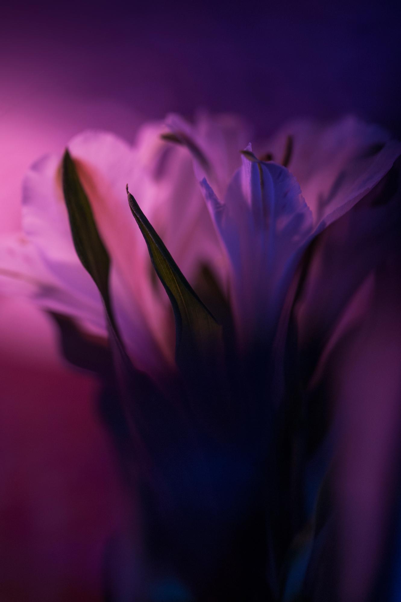 © Anne-Claire Vimal du Monteil | Floral Impressions