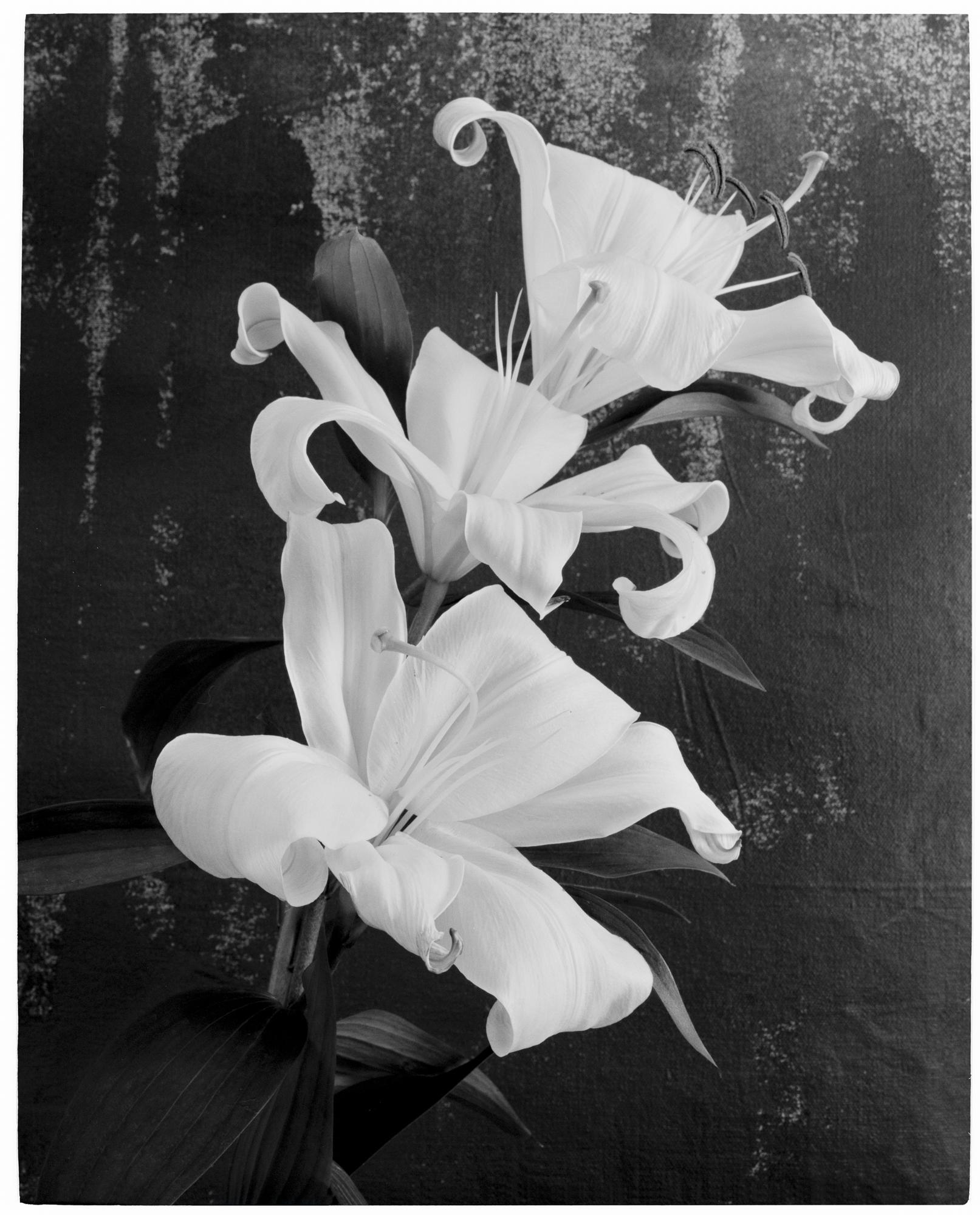 © Benjamin Lurie | Redux Flowers