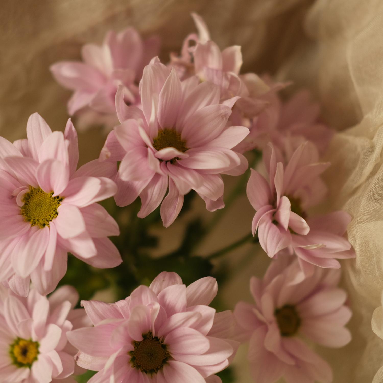 © Cat Hamilton | My Most Expressive Flowers