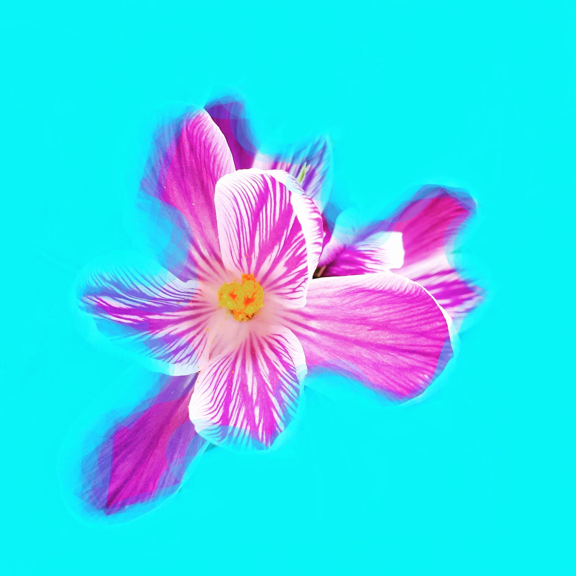 © Caterina Codato | Di fiore in fiore