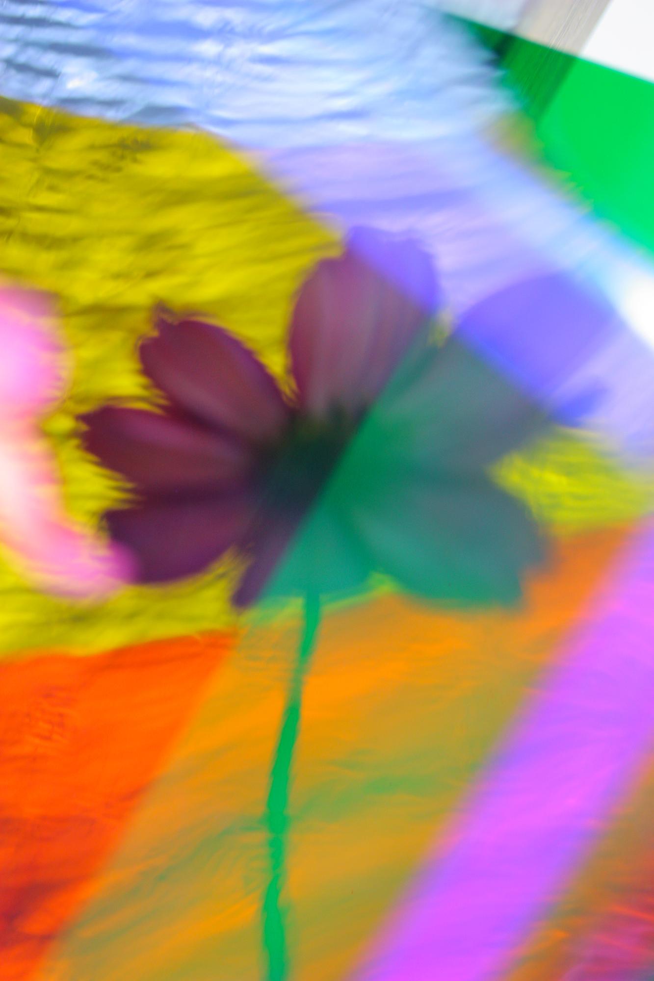© David Garland | Refracted Flowers