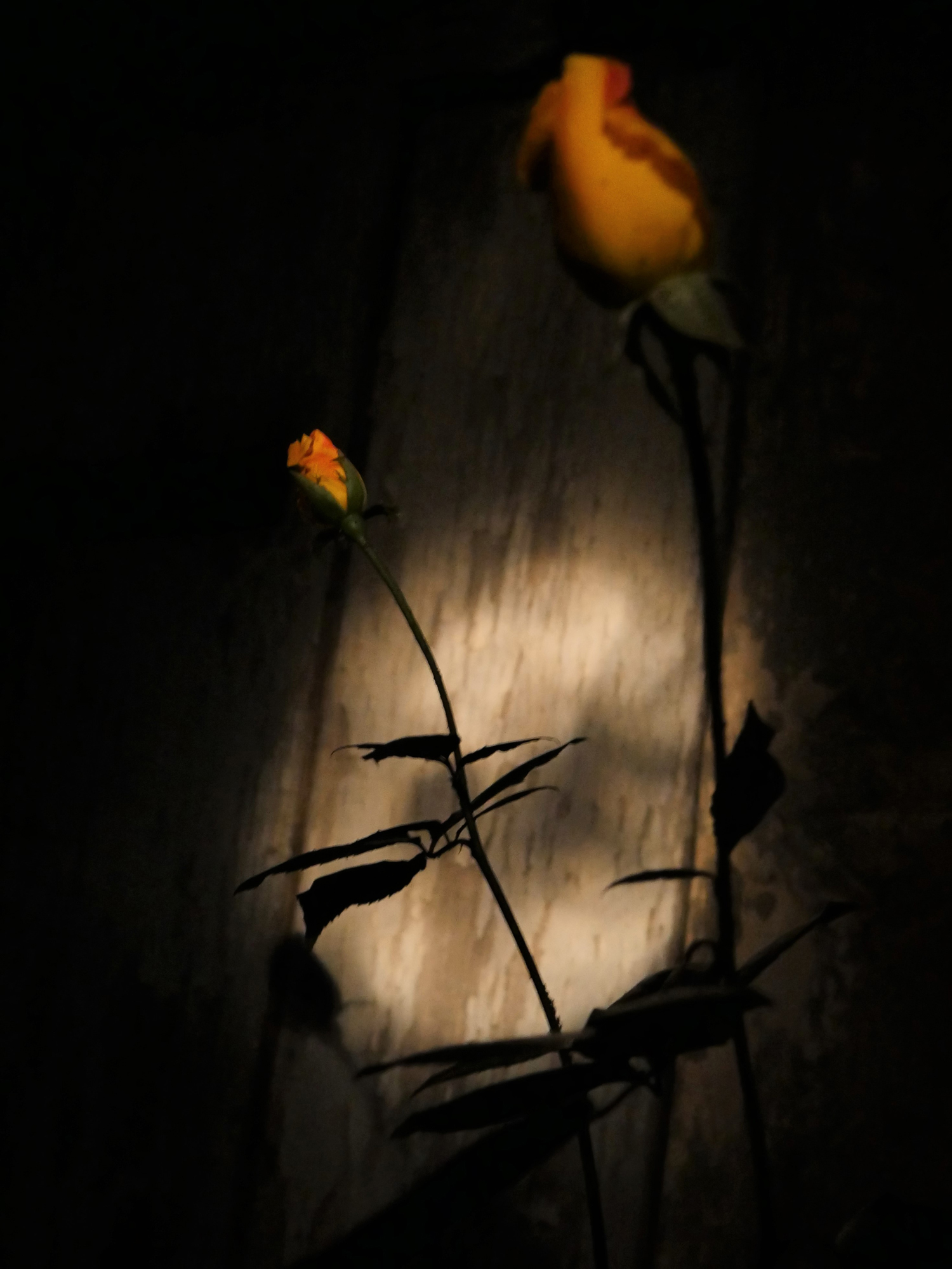 © Françoise Goldstein | Days and nights of flowers
