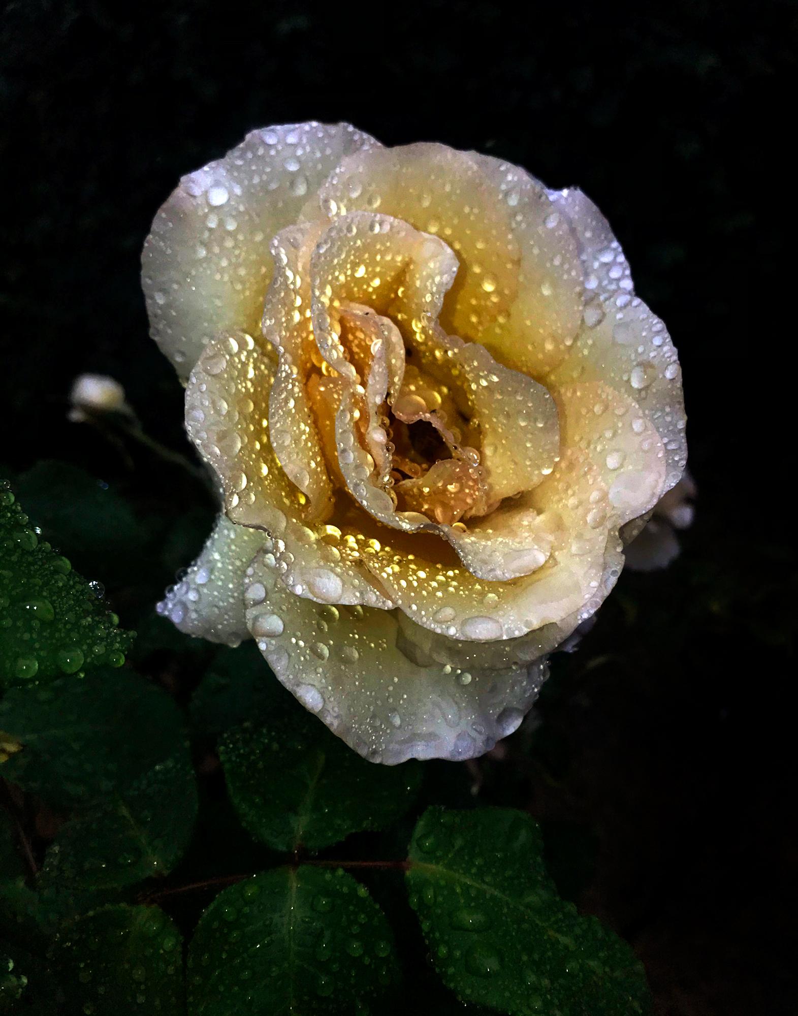 © Jon Feinstein | Flowers For...