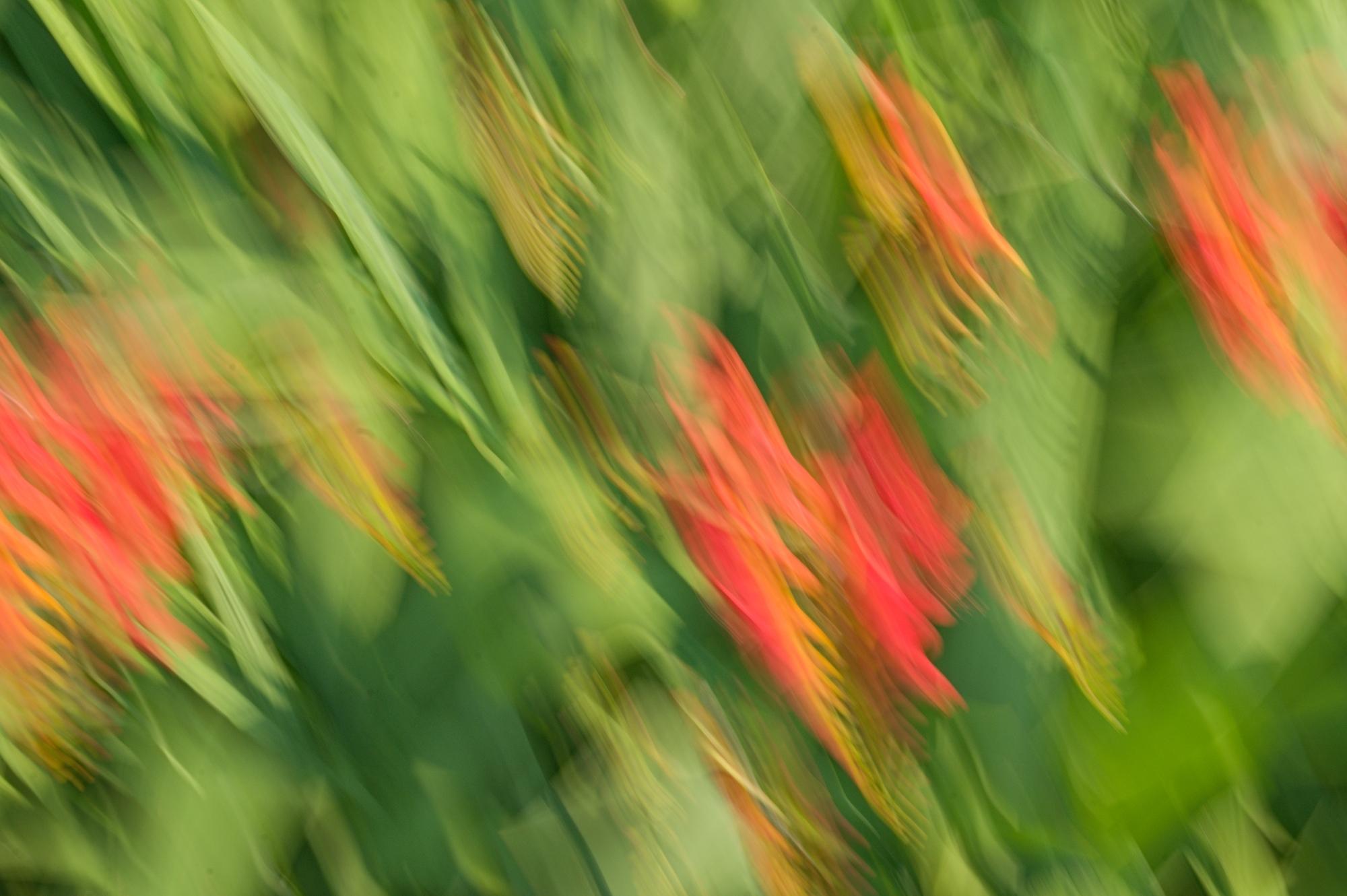 © Karen Crouse | Flower Movement