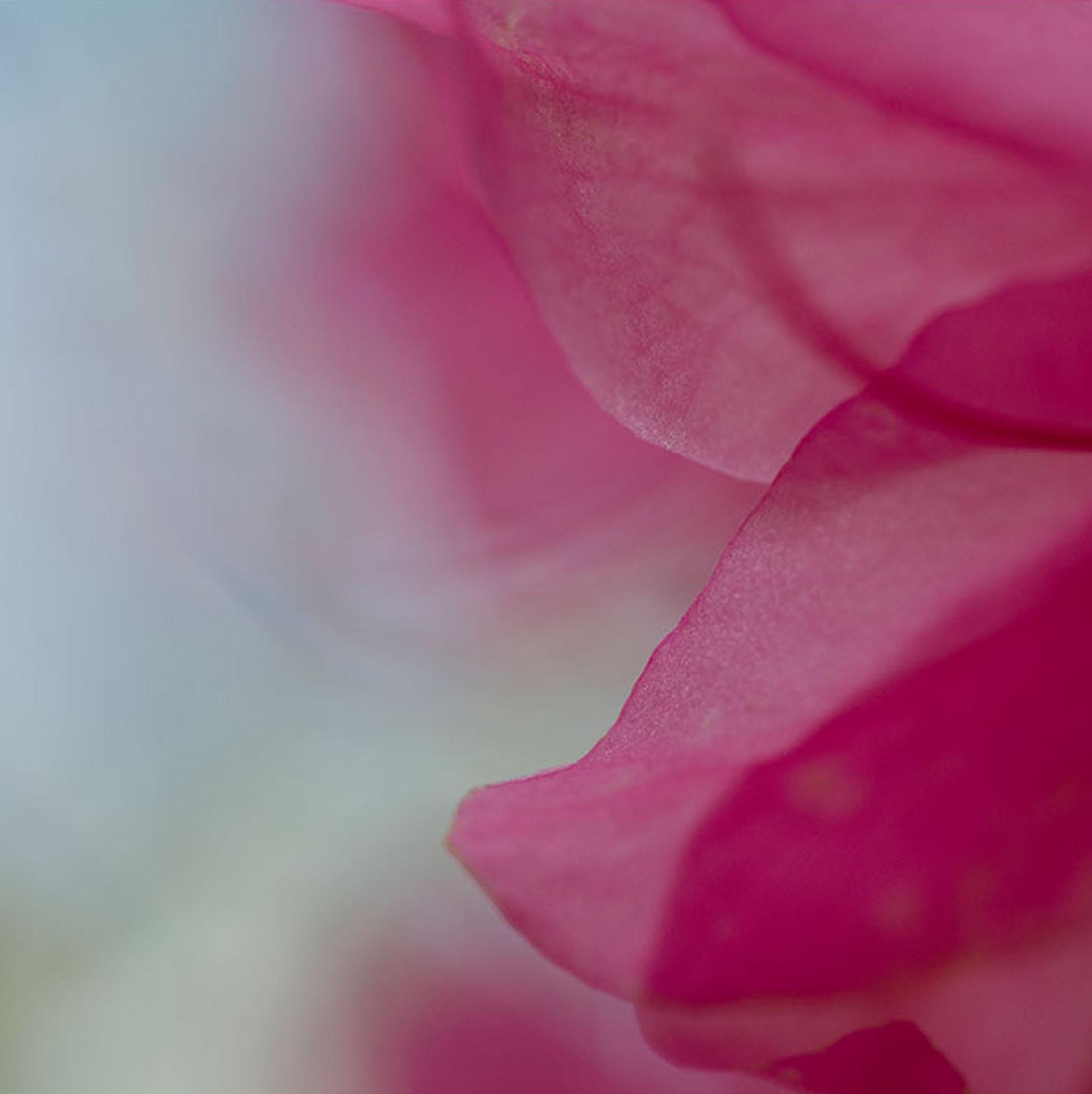 © Kirsten Hoving | Herbarium