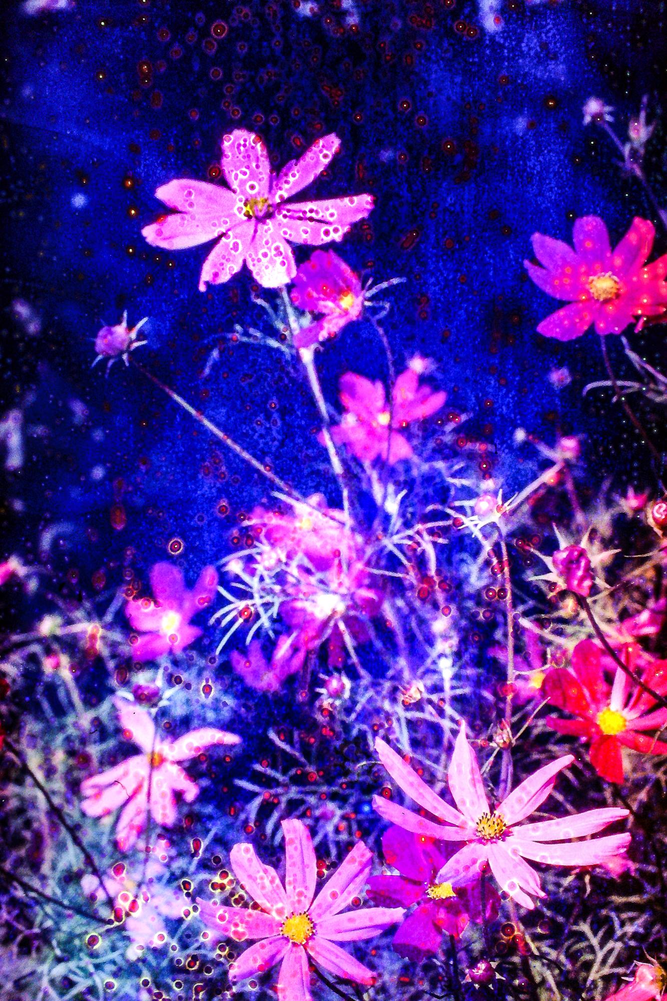 © Mateusz Wiglinzki | Bloom