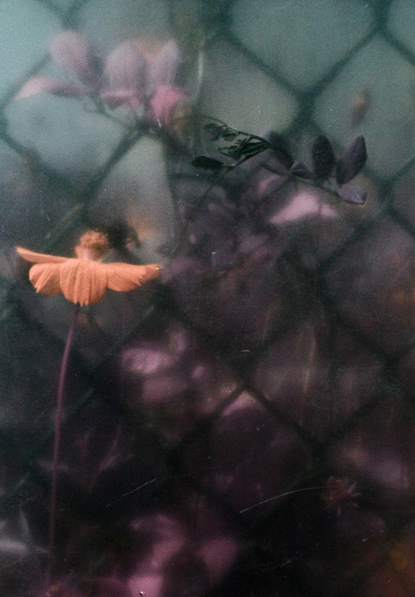 © Debora Francis | Flowers So Far