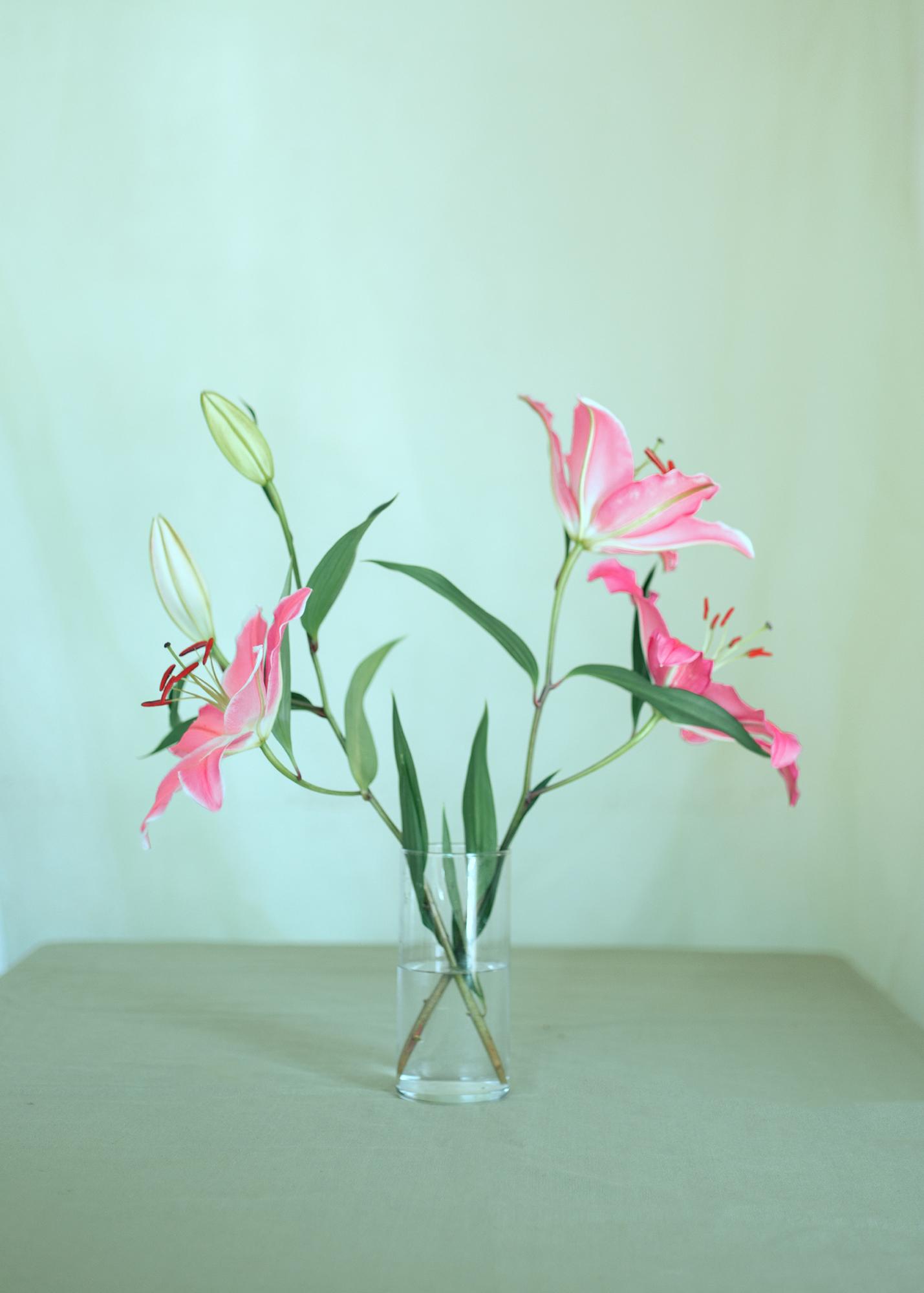 ©Erika Orozco | The Beauty of Botany