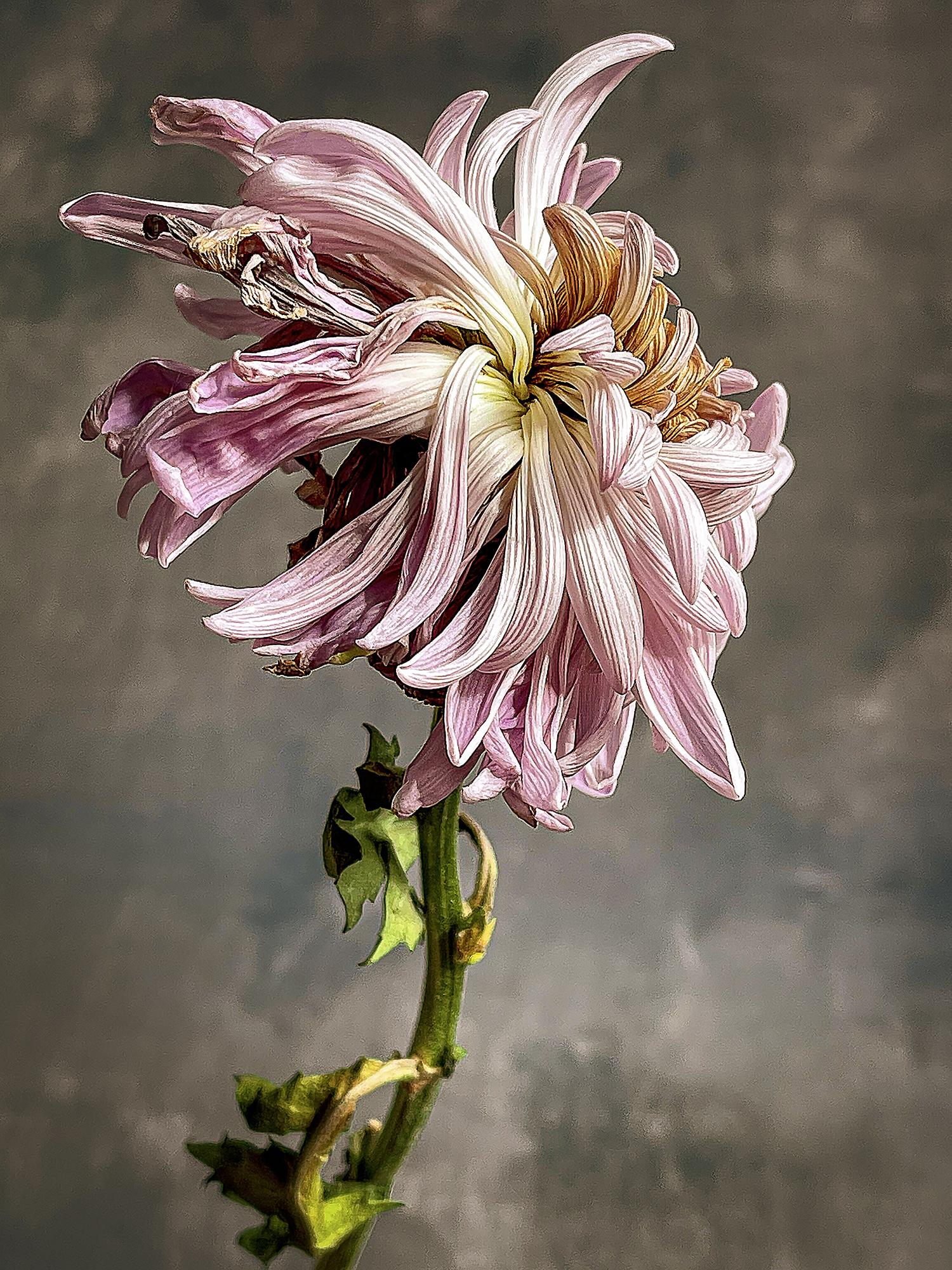 © Holly Romano | Unseen Beauty