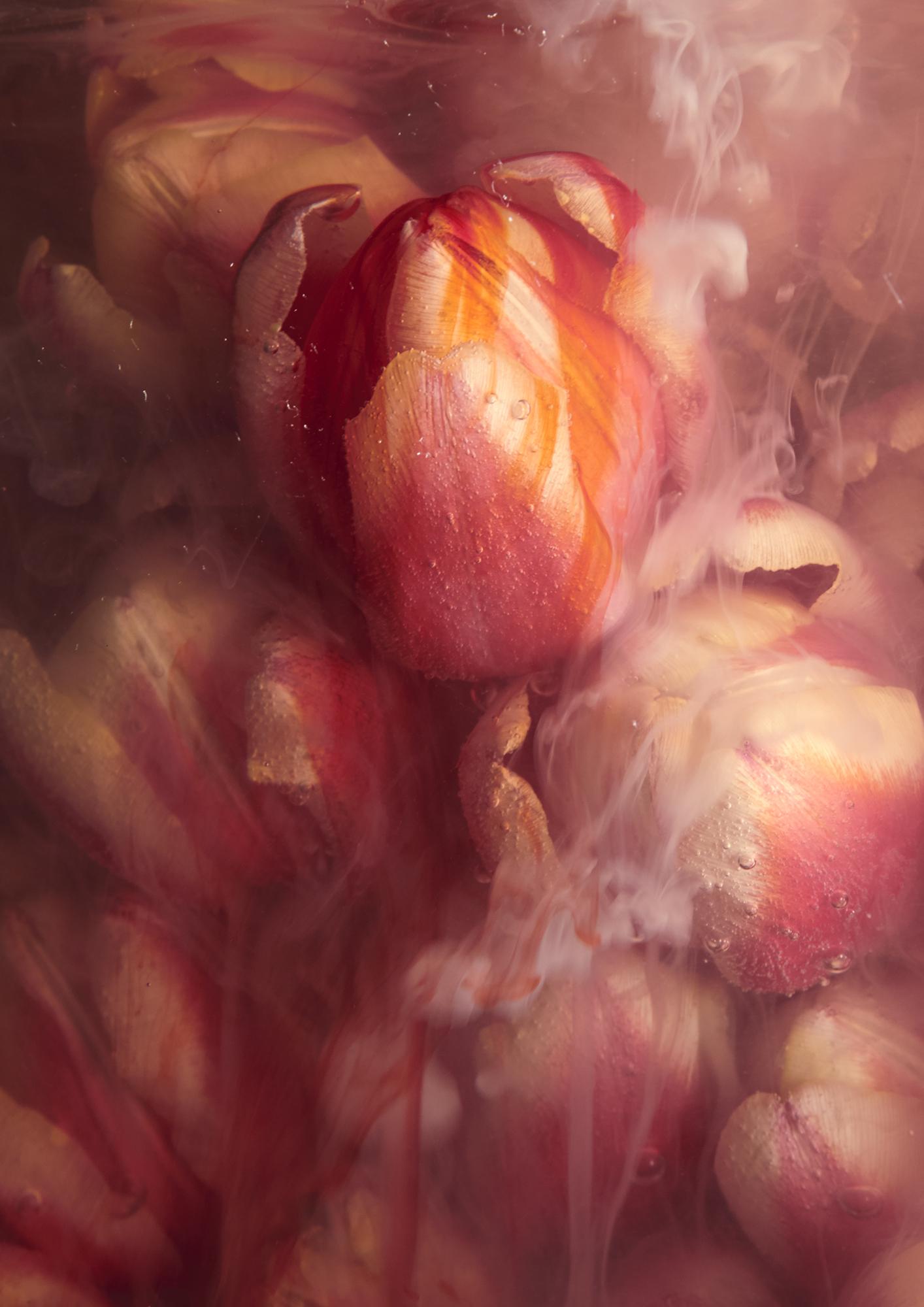 © Sandra Madelane | Flower Series