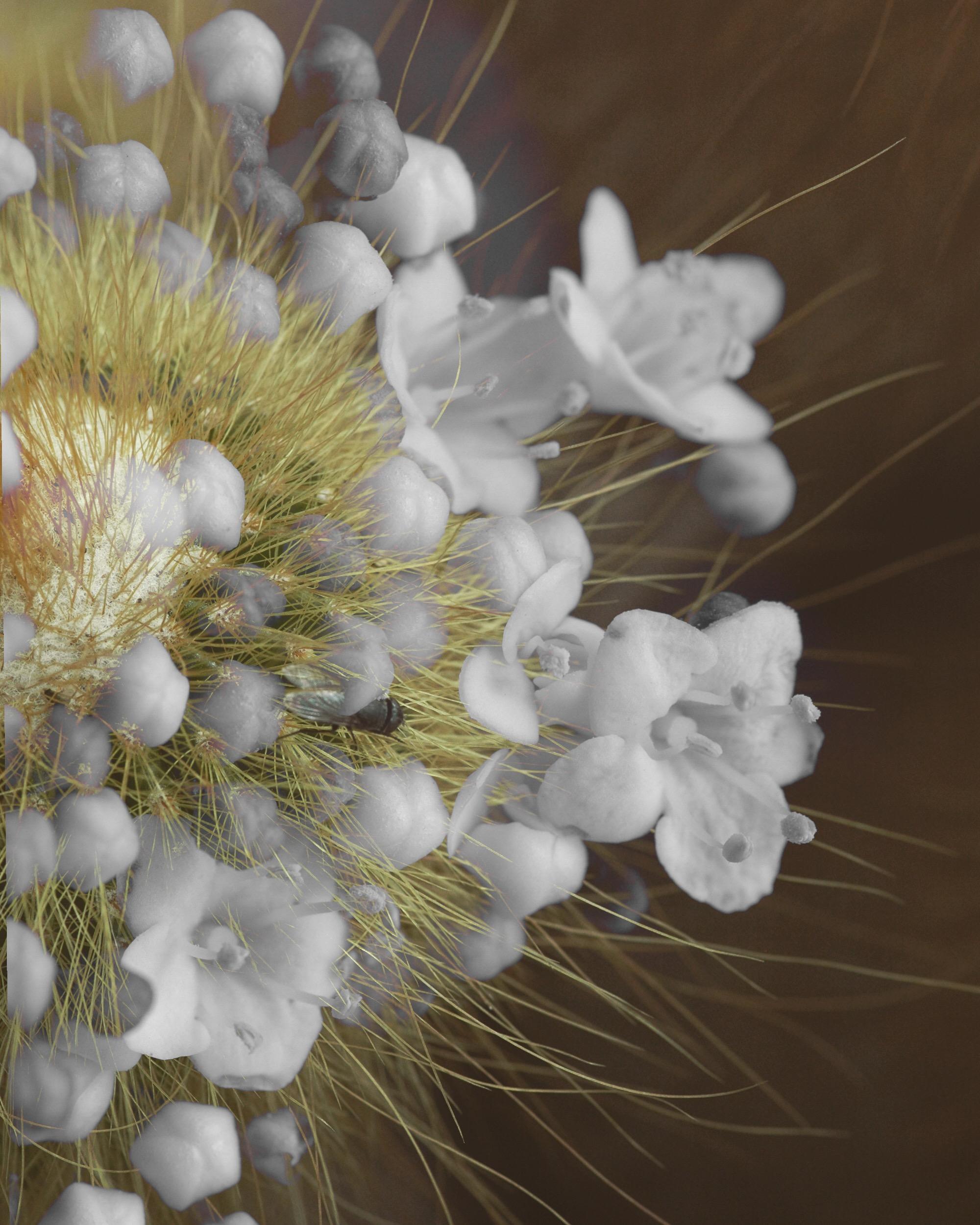 ©Laura Feliu | Impossible flowers