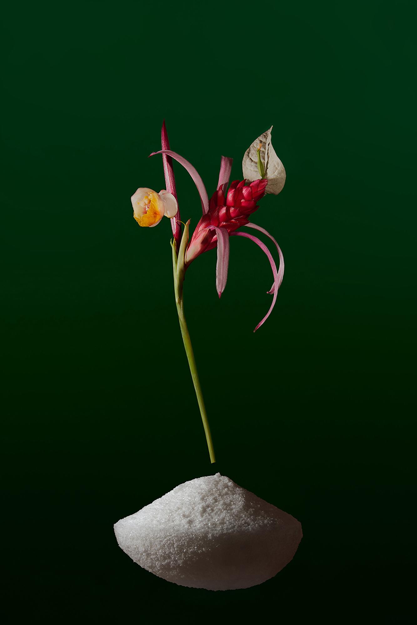 © Zuania Muniz-Meléndez | Vademecum Vigorous Flowers