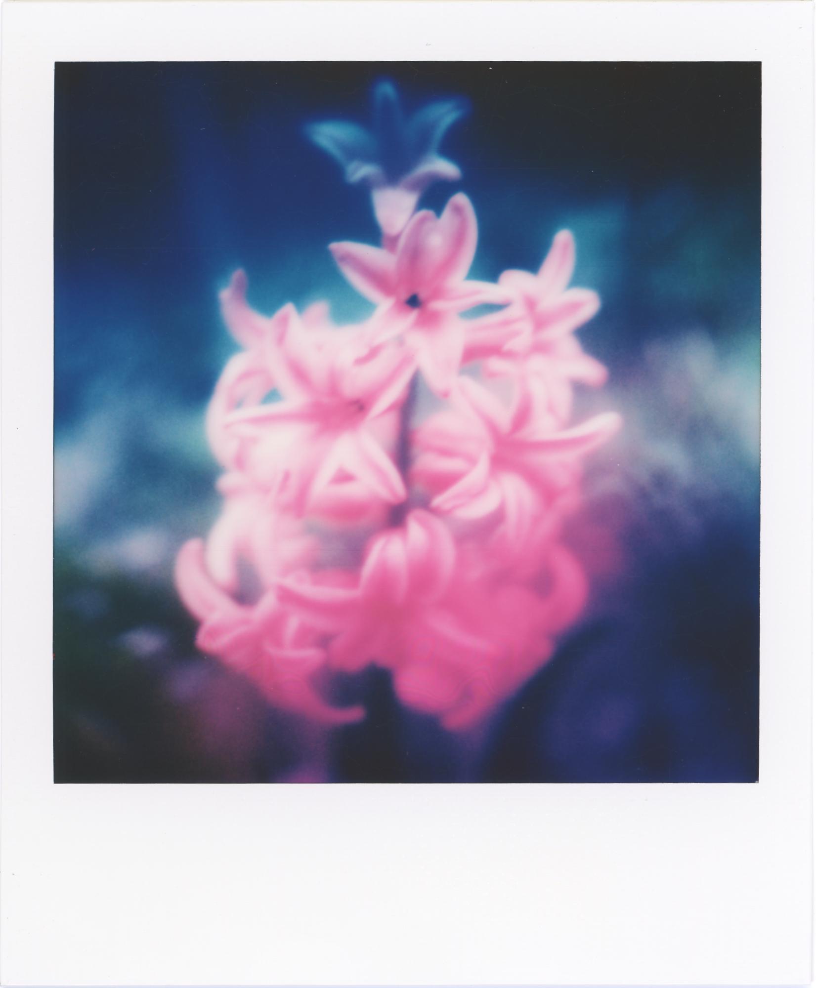 © Miniman | Spring Flowers Dream