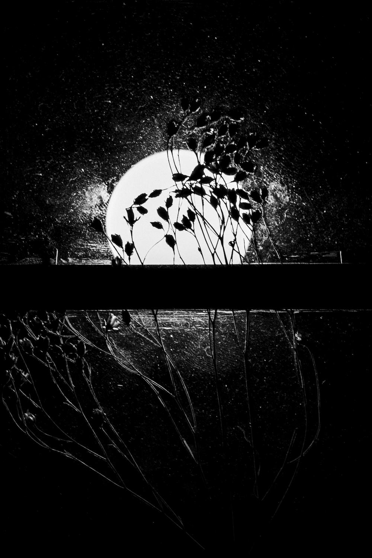 © Shervine Nafissi | Through introspection