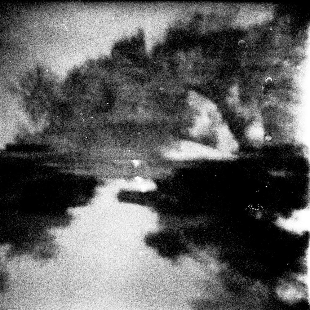 © Vincenzo Forino | La morte dell'ulivo