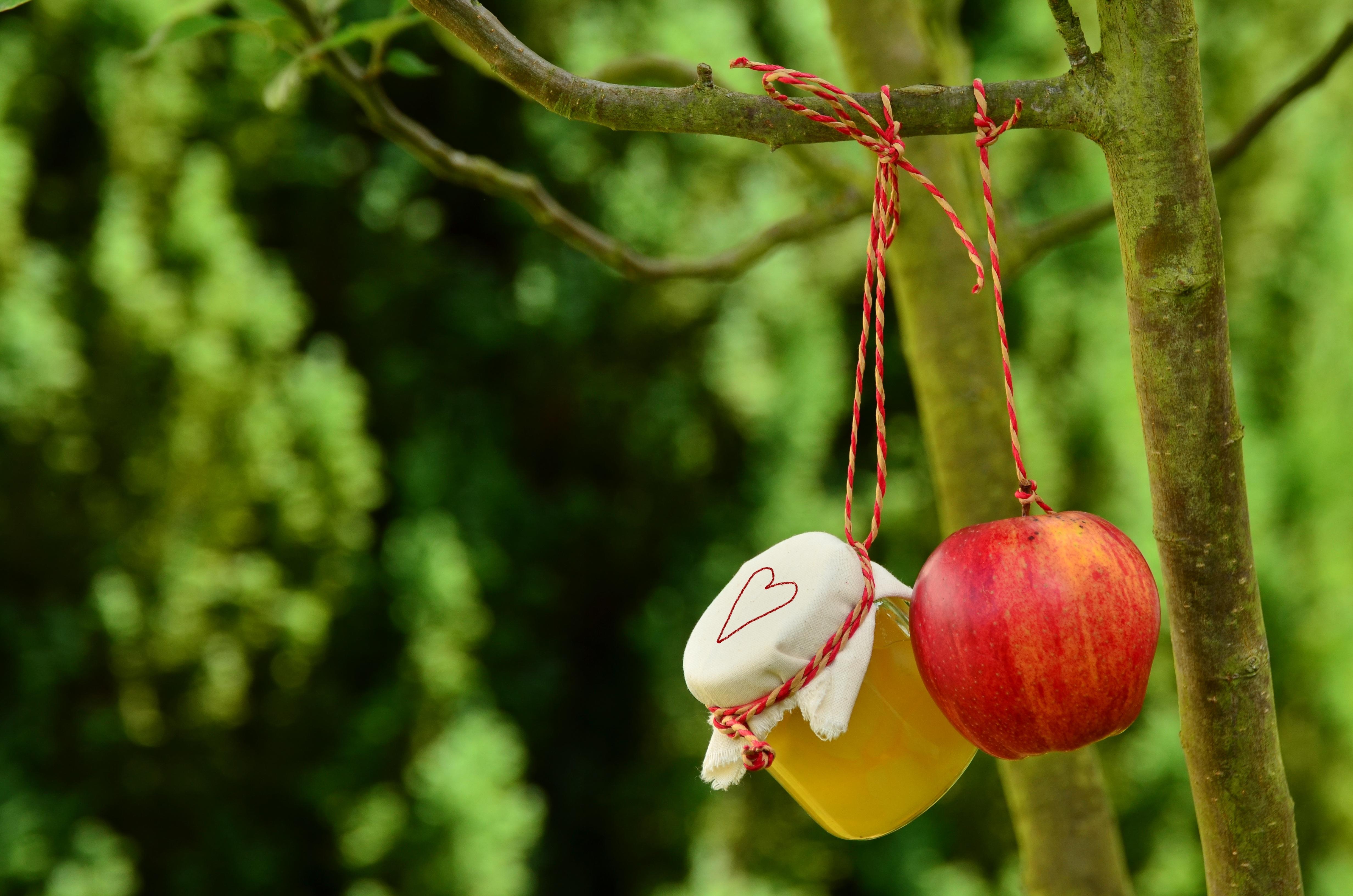 apple hanging next to cider jar