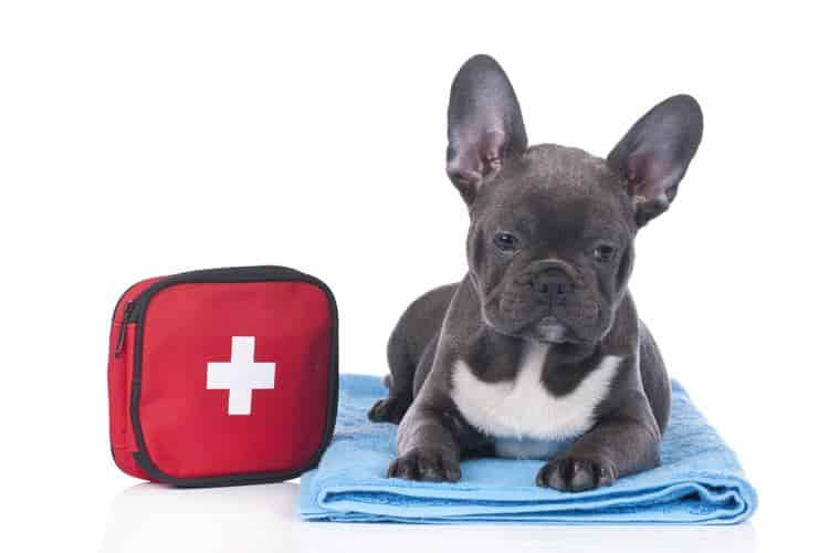 first aid kit for dogs when boating