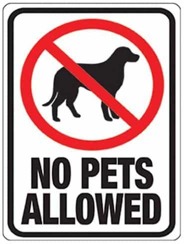 no pets allowed when sailing