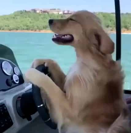 boating with dog rules
