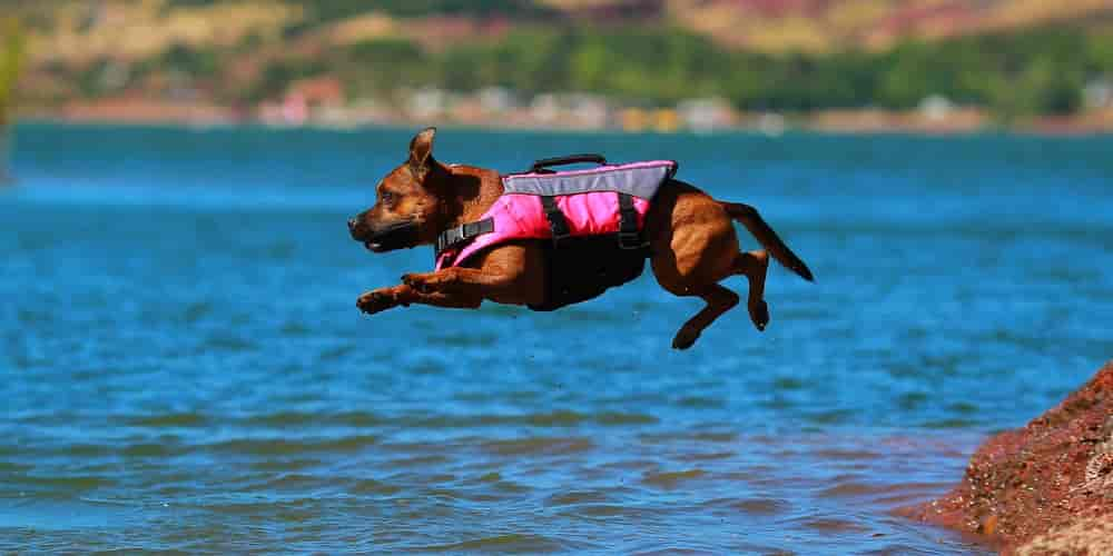 dog overboard plan