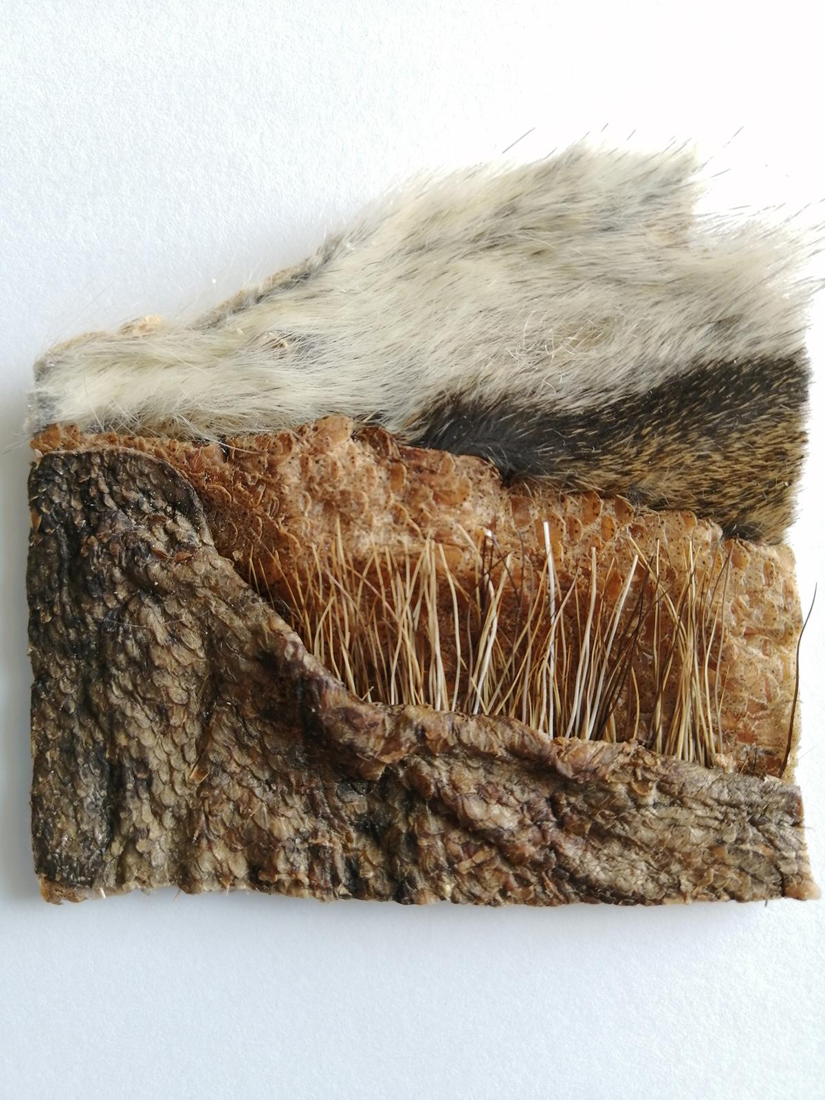 Susan Furneax, Untitled, Atlantic cod (Gadus morhua), Moose Hair (Alces alces), Red Squirrel (Tamiasciurus hudsonicus), 2021, 8 cm x 8 cm (Photo Credit: Jennifer Cake)