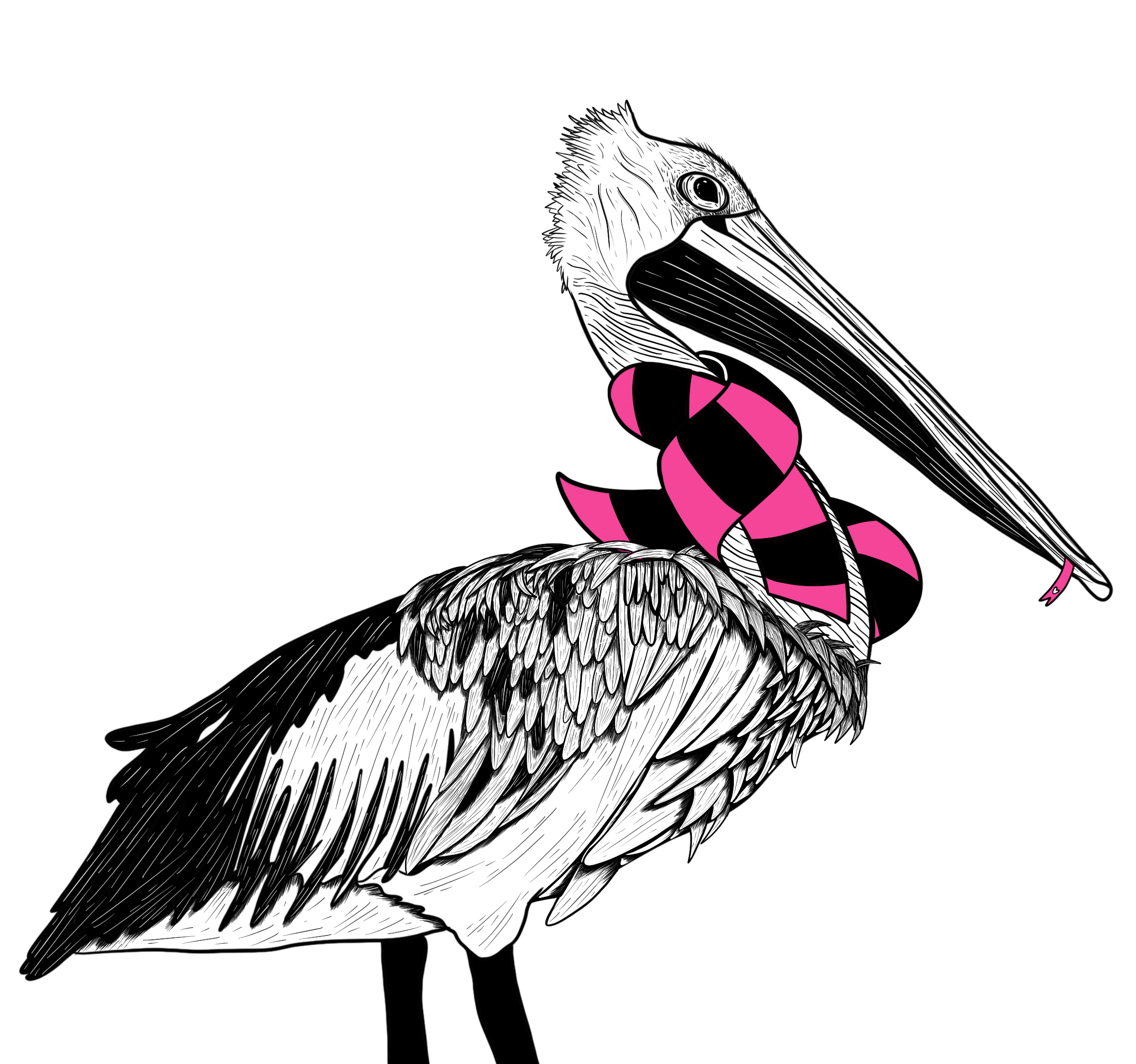 Pelican with a pink and black scarf on.