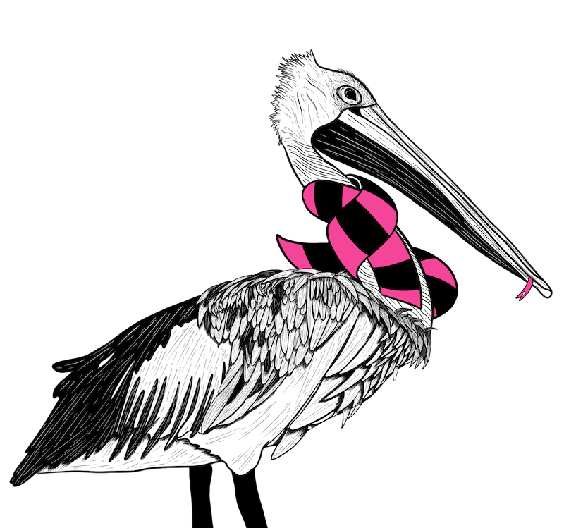 Pelican with a black and pink scarf on.