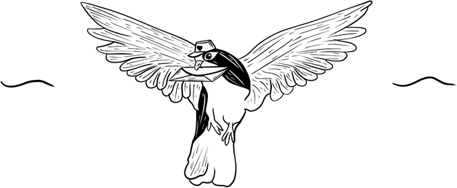 Black and White Dove illustration
