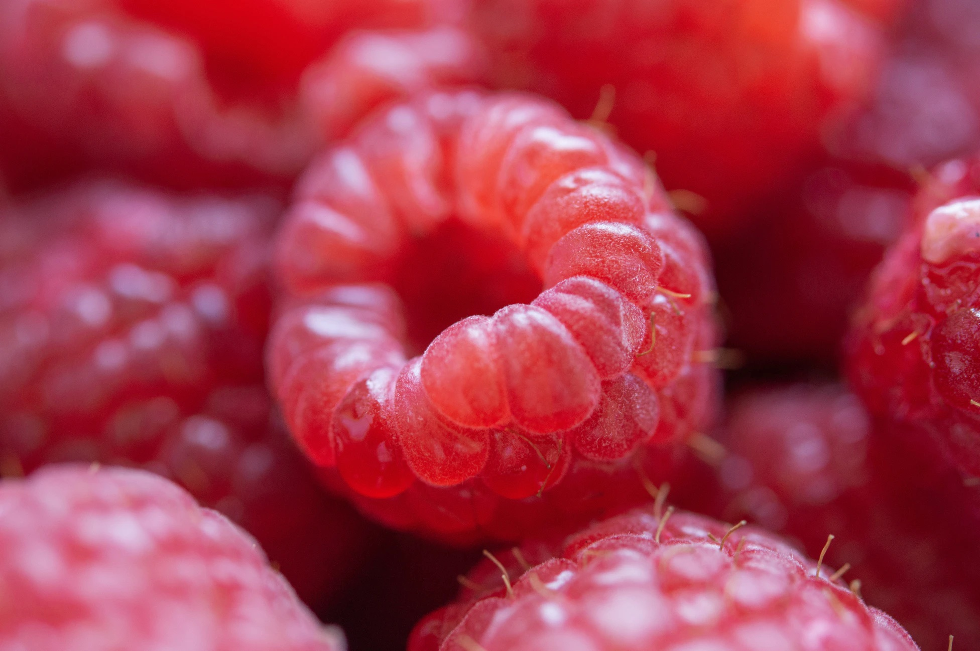 Raspberries photographed with depth of field