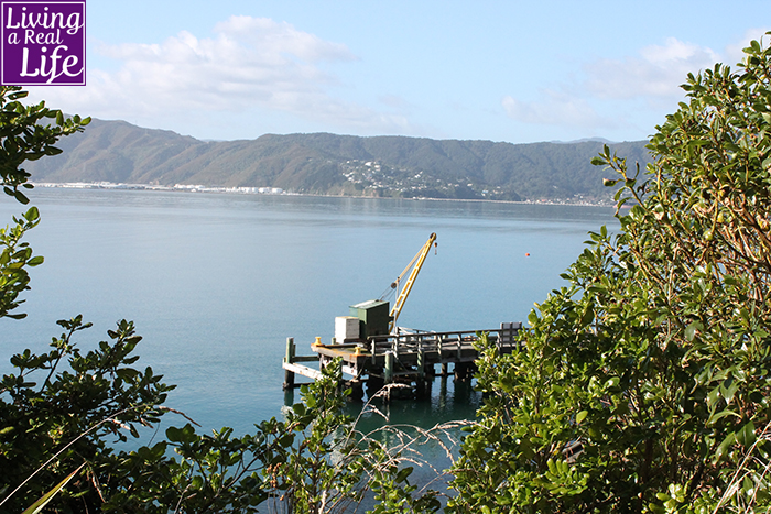 View of the dock at Matiu/Somes Island looking back at Eastbourne.adD