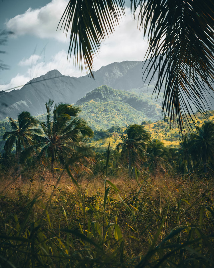 Palm trees behind mountains in Oahu, Hawaii