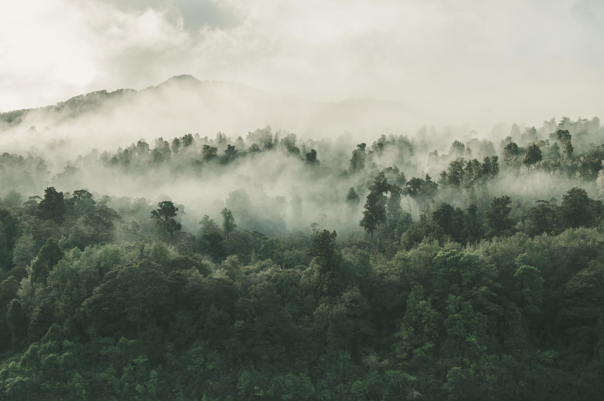 Financiële sector publiceert gids over het tegengaan van ontbossing