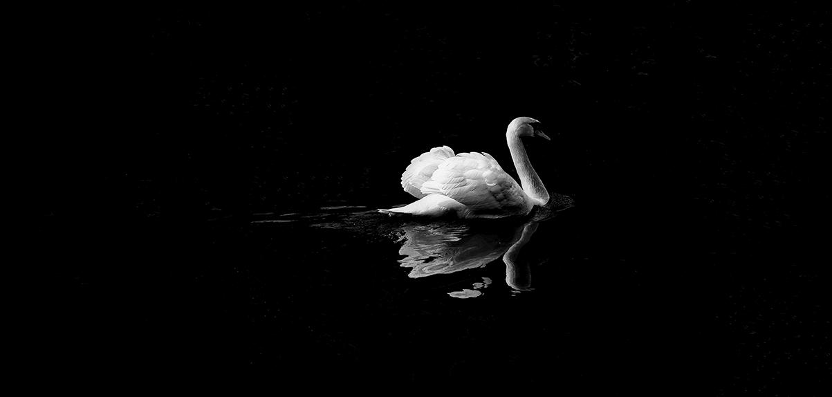 animal-contrast