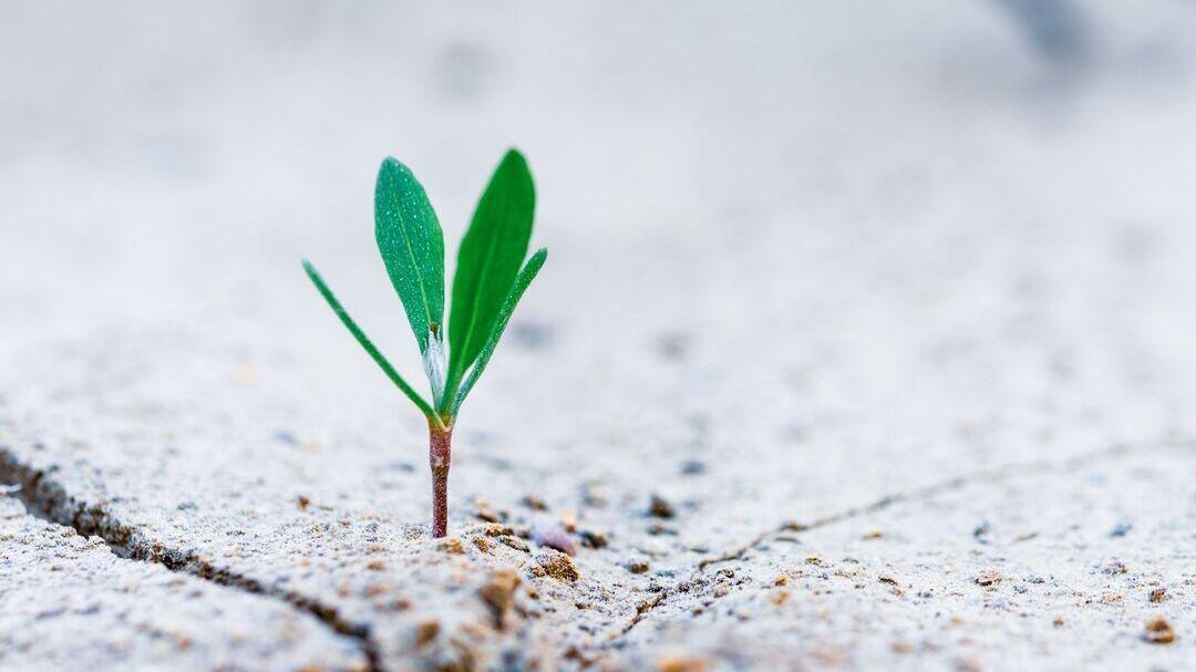 Micro-entreprise: quelles nouveautés en 2020?