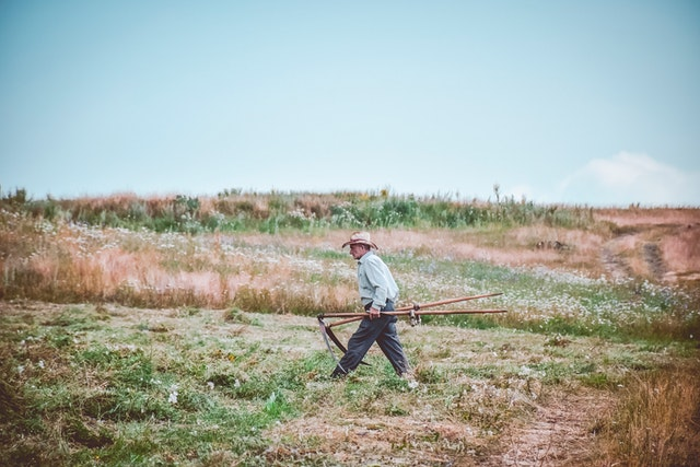 Farmer tending to his field