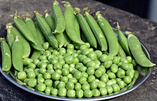 Sweet Field Peas