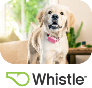 Whistle Chatdesk customer logo