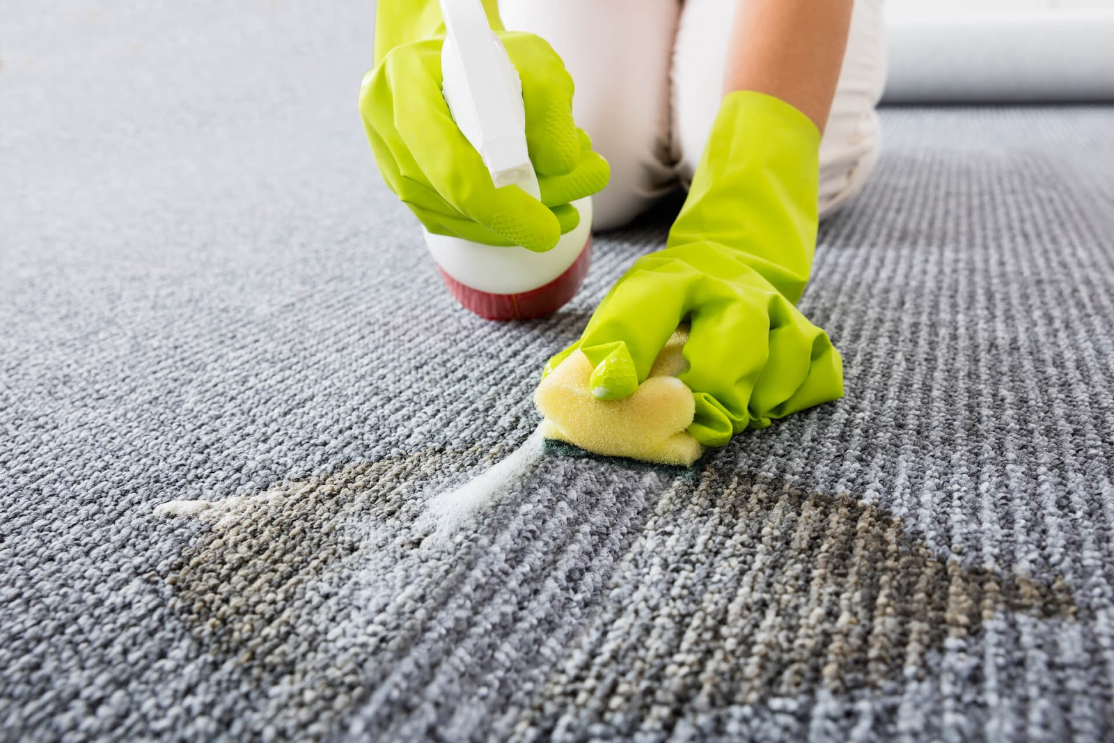 Close up of hands scrubbing cat pee out of the carpet