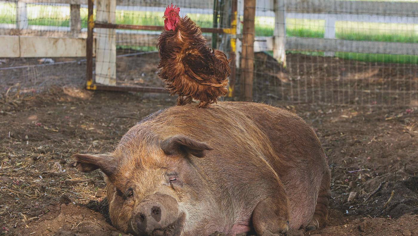 Still fra filmen 'Den største lille gård'.
