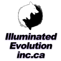 Illuminated Evolution Inc