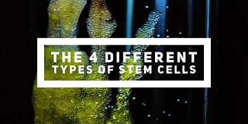 What are the 4 different types of stem cells?